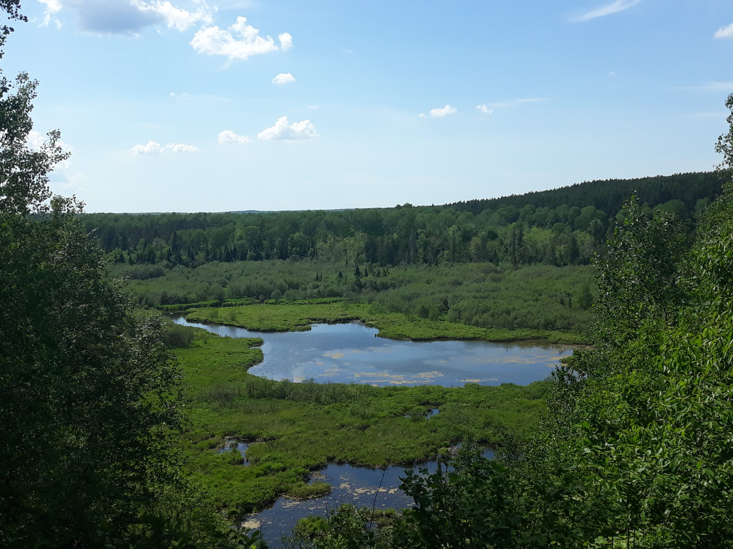 Picture of a small lake surrounded by dense greenery and a blue sky.
