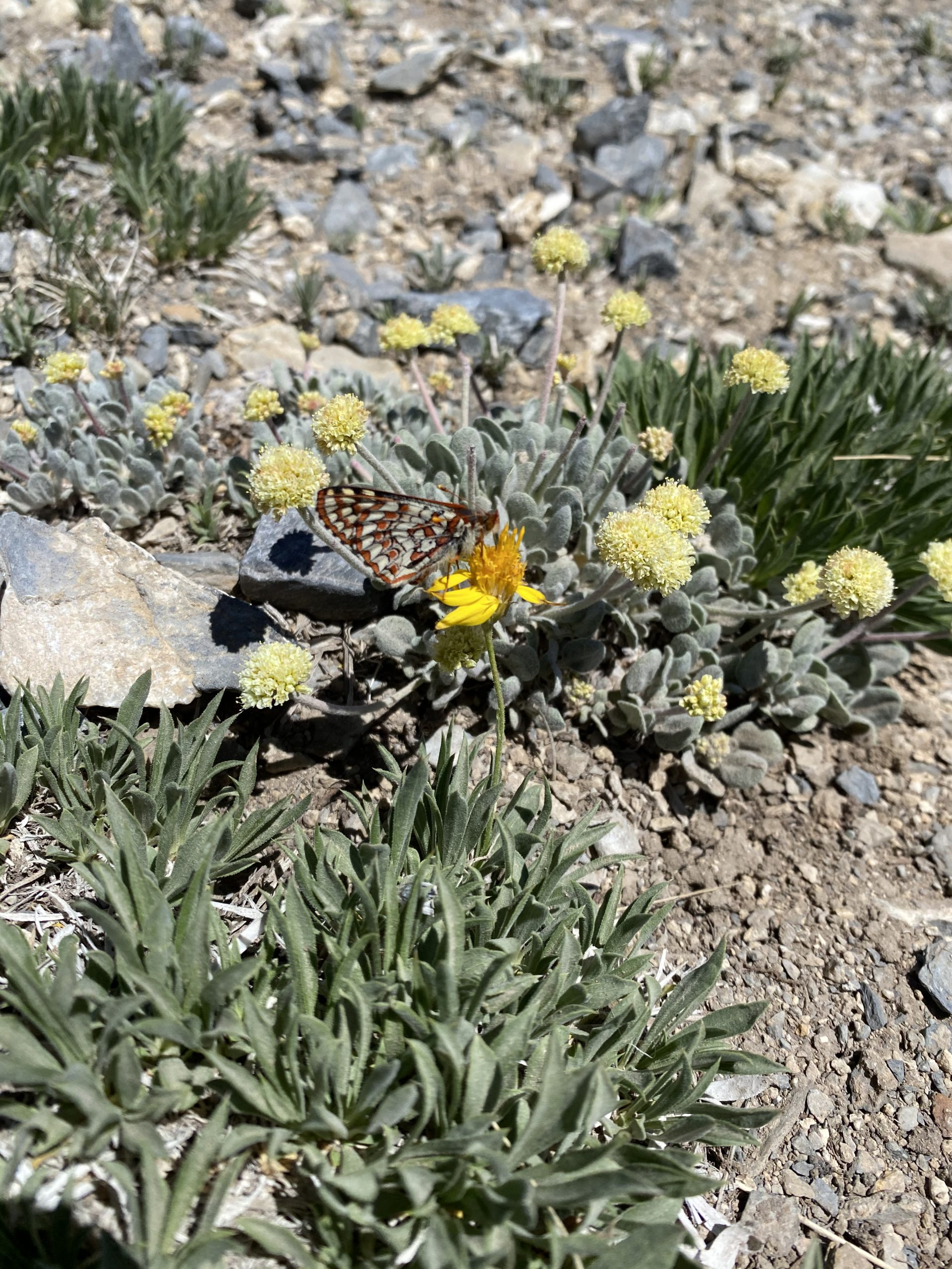 Butterfly pollinating a flower along with some other plants