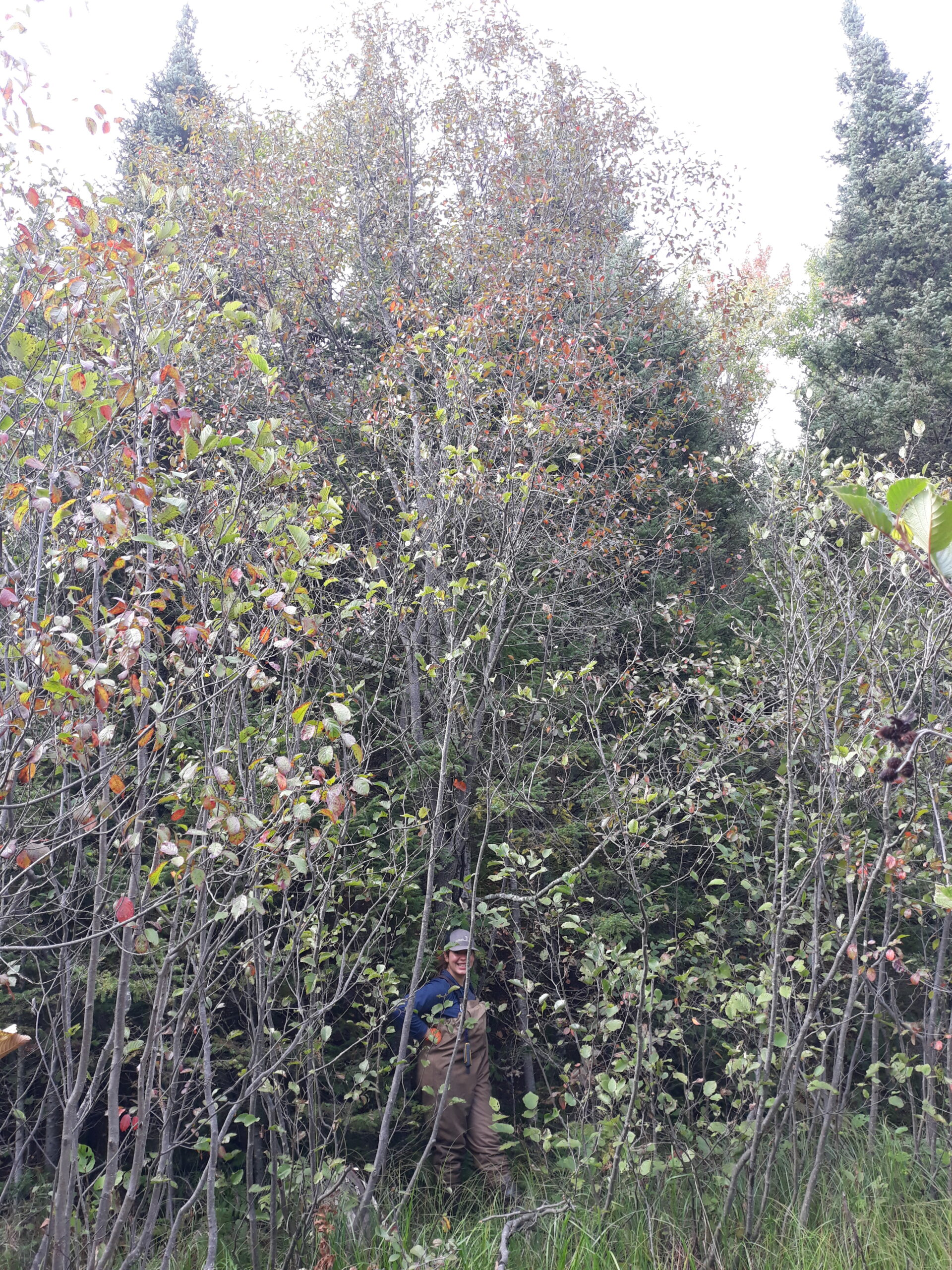 Tessa stands in a marsh with one hand on a very tall buckthorn with red leaves.